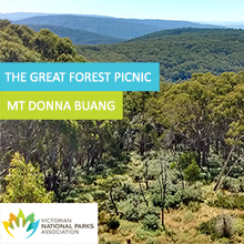 Environmental events - The Great Forest Picnic