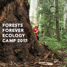 Environmental events - Forests Forever Ecology Camp with Environment East Gippsland and VNPA