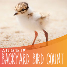Environmental events - Great Aussie Backyard Bird Count