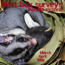 Environmental events - nest box surveys with the Regent Honeyeater Project - march april and may 2015