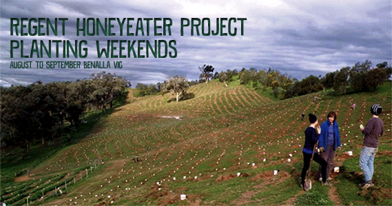 Environmental events - Threatened Species Planting Weekends - Regent Honeyeater Project
