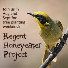 environmental events - Regent Honeyeater Project tree planting weekends